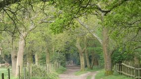 Tree lined Avenue at Havering Country Park 3. An Oak tree canopy in beautiful sunshine royalty free stock images