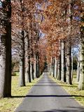 Tree-lined Avenue in Mill Hall Township Stock Image