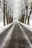 Tree lined avenue after snowfall. Tree lined avenue in winter time after a snowfall royalty free stock images