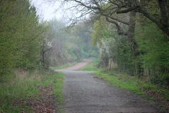 Tree lined Avenue. In spring time leading to the house at the end of the lane royalty free stock photo