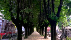 Tree-lined avenue during a sunny day. Inside a cemetery surrounded by gravestones. Milan, Italy stock video