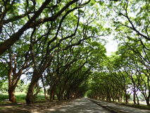 Tree-Lined Avenue. Trees either side of a road, meeting in an arch in the middle Royalty Free Stock Photo