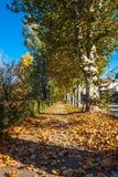 Tree lined avenue in Turin Italy Stock Photo