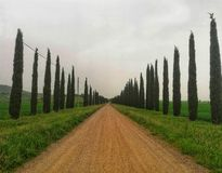 Tree-lined avenue in Tuscany. Tree-lined avenue tuscany country perspective tuscanlandscape cypresses treeslinedup italy toscana europe treelined empty-road royalty free stock photos