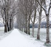 Tree-lined avenue in winter after snowfall. Park in Milan stock images