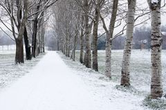 Tree-lined avenue in winter after snowfall. Park in Milan royalty free stock photo