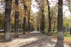 Tree lined boulevard in Bishkek Stock Photography
