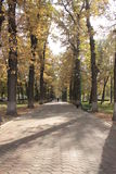 Tree lined boulevard in Bishkek Royalty Free Stock Image