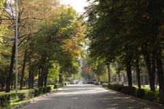 Tree lined boulevard in Bishkek Stock Images