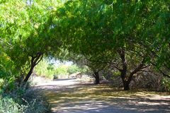 Tree lined canopy royalty free stock photo