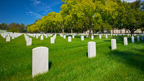 Tree-lined Cemetery Road Stock Images