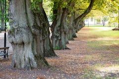 Tree lined,city park. stock photography