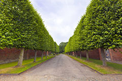Tree lined country alley. Royalty Free Stock Image