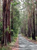 Tree lined country road. A beautiful tree lined road in Springbrook, Queensland Australia Royalty Free Stock Image
