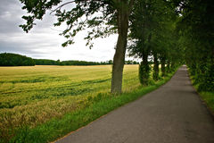 Tree-lined country road. Country road surrounded by fields and green trees Stock Photo