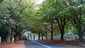 Tree lined country road during autumn fall royalty free stock photography