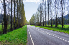 A tree lined country road near Marysville, Australia. Royalty Free Stock Images