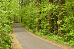 Tree Lined Country Road. This Oregon small rural country road is lined with green evergreen and deciduous trees as it moves along into the forest during spring Royalty Free Stock Image