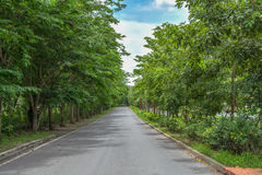 Tree lined country road Stock Images