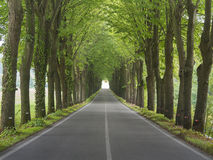 Tree lined country road Royalty Free Stock Photo
