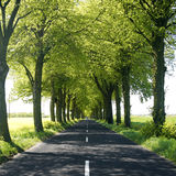 Tree lined countryside road Stock Photography