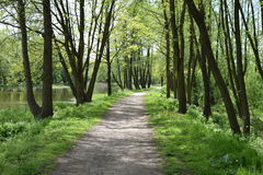 Tree lined dirt path in the park Stock Images