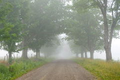 Tree lined dirt road Royalty Free Stock Photos