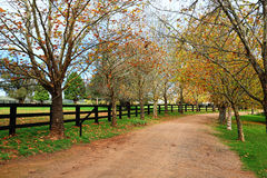 Tree lined dirt road in Autumn Royalty Free Stock Photo