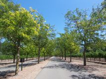Tree Lined Drive Royalty Free Stock Image