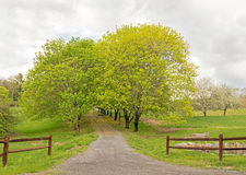 Tree lined driveway and fence Royalty Free Stock Images