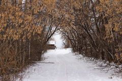 A tree lined driveway in winter Royalty Free Stock Photography