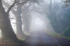A tree lined English country lane in the mist stock images