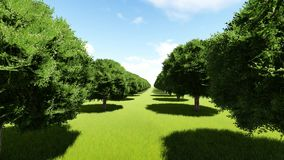 Tree lined entrance to tree Alley royalty free illustration