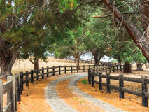 Tree-lined fenced driveway leading to a country estate Stock Image