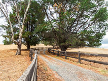 Tree-lined fenced driveway leading to a country estate Royalty Free Stock Photography