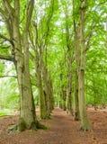 Tree lined ferrest path Stock Photos