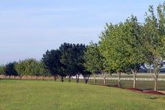 Tree lined field Royalty Free Stock Photo