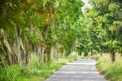 Tree lined footpath Royalty Free Stock Image