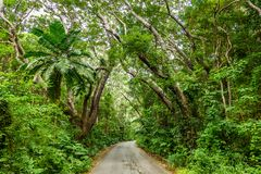 Tree-lined gang in Cherry Tree Hill Reserve - Caraïbisch eiland Barbados stock foto's