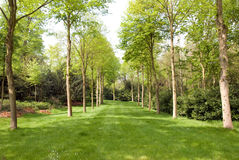 Tree lined grass avenue Royalty Free Stock Photography