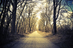 Tree-lined gravel country road. Vintage, retro look. Direction or path concept. Stock Photos