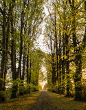 Tree-lined gravel road on a sunny autumn day royalty free stock photography
