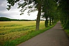 Tree-lined landweg Stock Foto