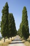 Tree-Lined landwirtschaftliche Straße lizenzfreies stockbild