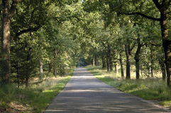 Tree lined lane. A narrow tree lined road Stock Photography