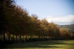 Tree lined lane on a estate farm landscape. Lane of trees on a farm estate landscape with hills and vineyards Stock Image