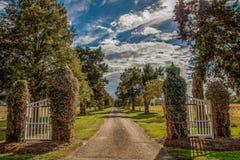 Lane to the farmhouse. Tree lined lane on the farm Royalty Free Stock Photo
