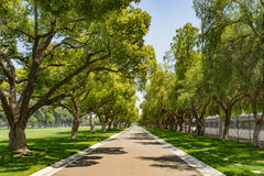 Tree Lined Lane in Los Angeles Royalty Free Stock Photo