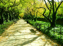 Tree-lined lane in park. A view of a straight, tree-lined lane in Central Park, New York City covered by a canopy of leaves royalty free stock image