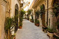 A tree lined lane in Sicily Royalty Free Stock Photography